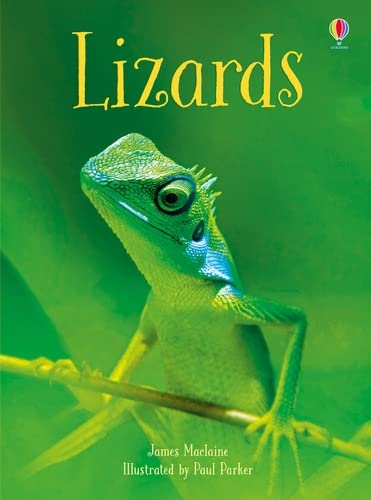 Maclaine, J: Lizards (Beginners) von Usborne Publishing