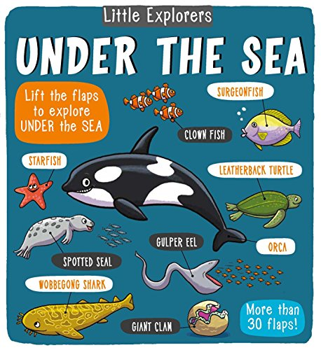 Little Explorers: Under the Sea von little bee books