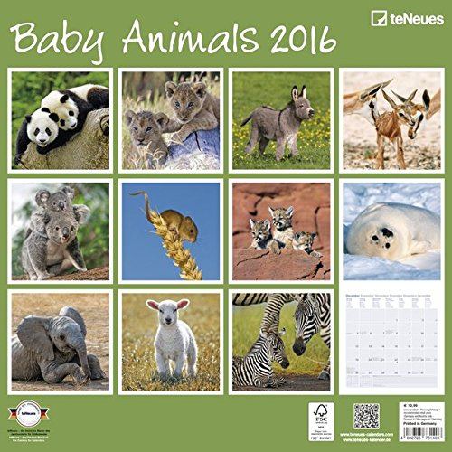 Baby Animals 2016 EU von teNeues Calendars & Stationery